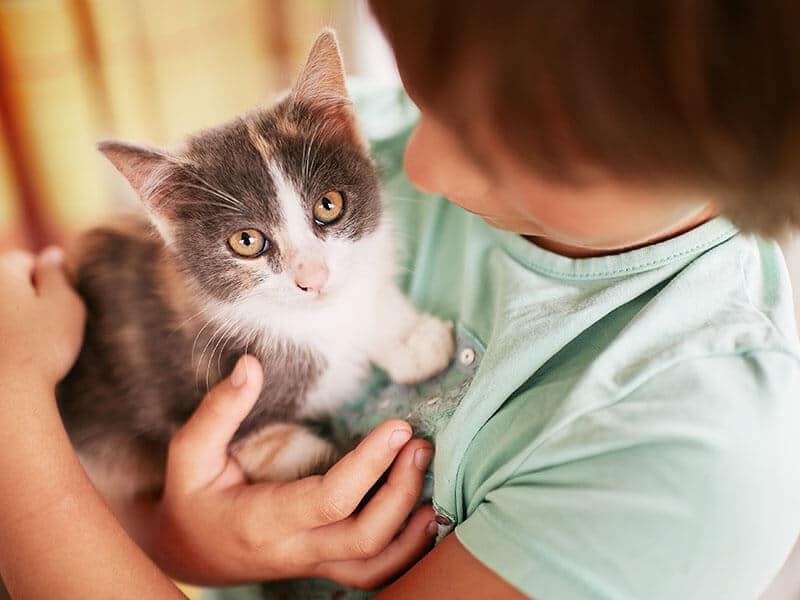 Puppies & Kittens Primary Care