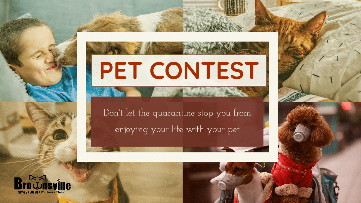 Pet Quarantine Mood Contest