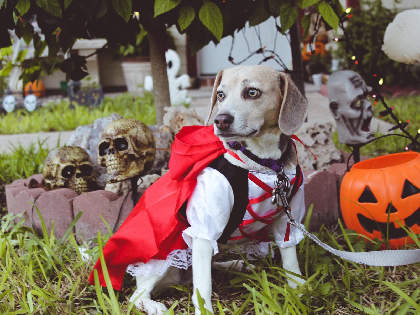 HALL-O-WEEN safety tips for pets!
