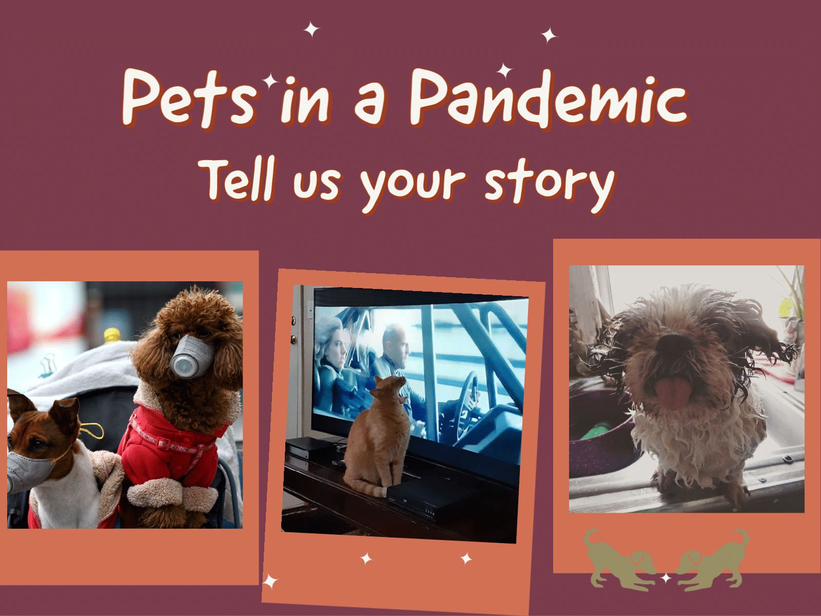 Pets in a Pandemic