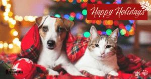 Consejos de seguridad para mascotas durante estas festividades